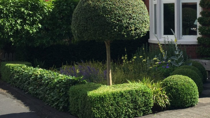 Clipping box topiary. Caroline Benedict Smith Garden Design Cheshire