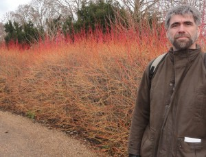 Cornus sanguinea Midwinter Fire- clay soil