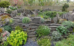 Solutions for clay soil gardens- raised alpine bed- Caroline Benedict Smith Garden Design Cheshire