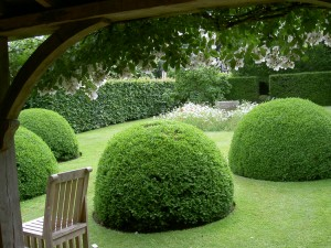 Clipped Box good for winter structure in Wollerton Old Hall - Caroline Benedict Smith Garden Design Cheshire