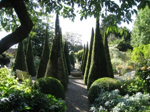 Clipped Yew in Wollerton Old Hall - Caroline Benedict Smith Garden Design Cheshire
