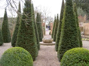 Clipped Yew in winter in Wollerton Old Hall - Caroline Benedict Smith Garden Design Cheshire