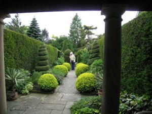 Lime leafed Buxus and Yew spirals showing winter structure at Yorkgatel - Caroline Benedict Smith Garden Design Cheshire