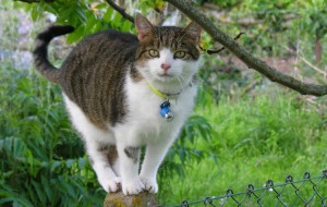 Cat On A Garden Pos -t Climbing High - Caroline Benedict Smith Garden Design Cheshire