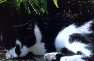 Having a Snooze 3 - Cats In The Garden - Caroline Benedict Smith Garden Design Cheshire