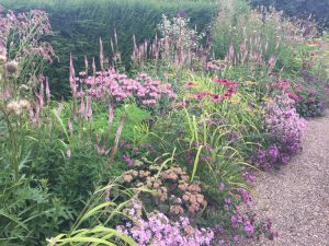 New Perennials or Wild Coastal Flowers at Dove Cottage - 2 - Caroline Benedict Smith Garden Design Cheshire