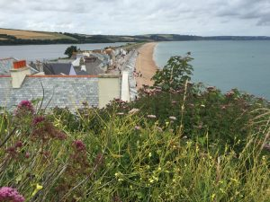 slapton-sands-coastal-flowers-from-torcross-caroline-benedict-smith-gar