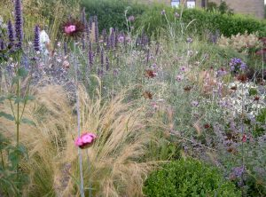 Dove Cottage Nursery -New Perennials In Raised Bed Like Coastal Plants - Caroline Benedict Smith Garden Design Cheshire